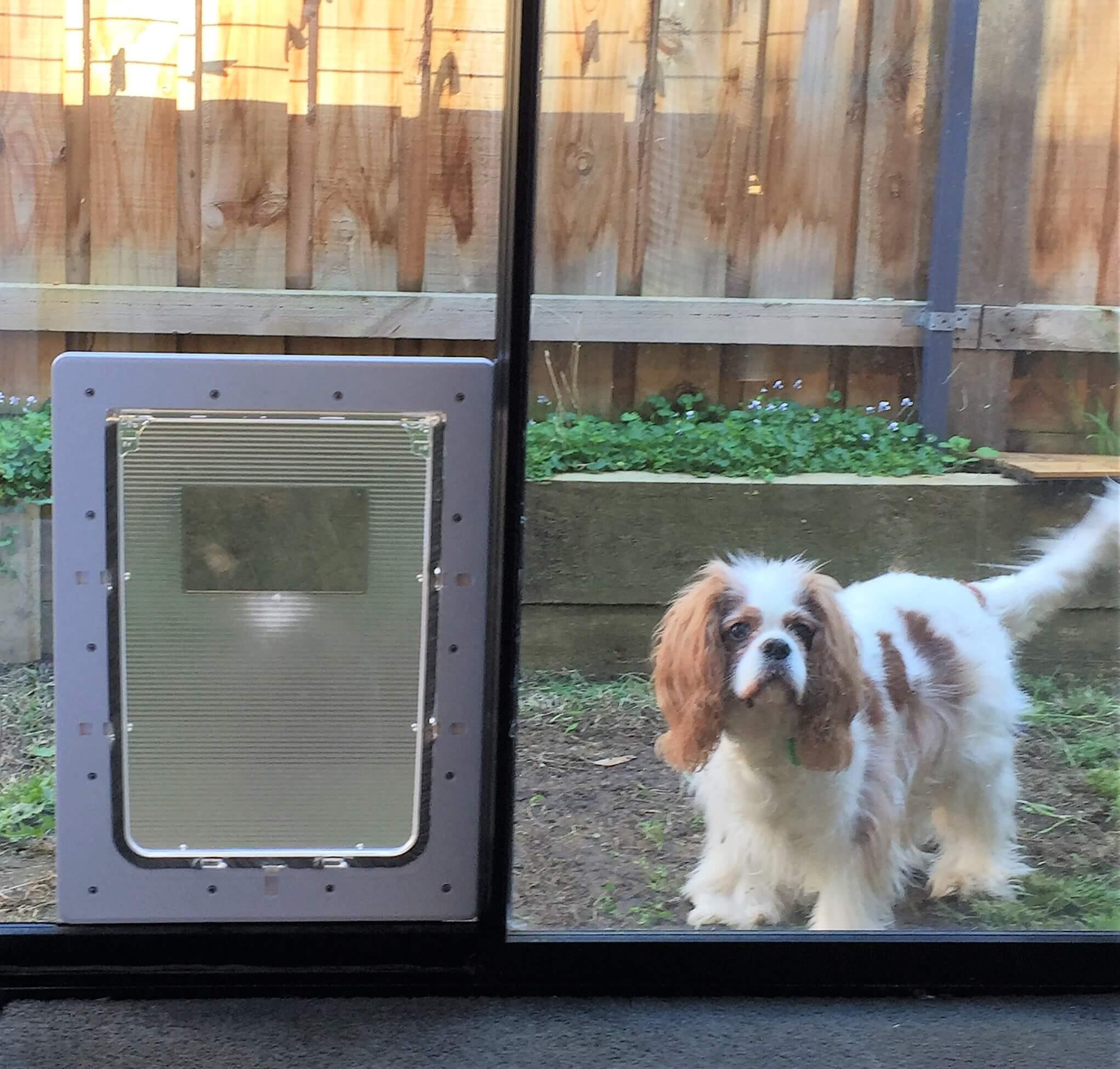 Large Rectangular Dog Door To Suit Glass Or Screen